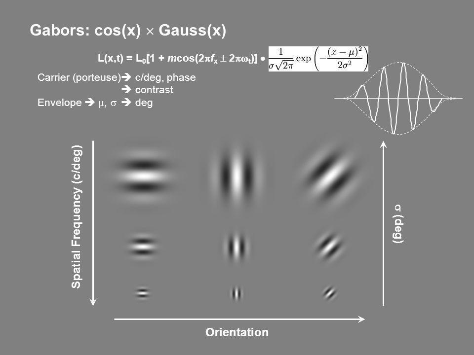 Gabors: cos(x)  Gauss(x) L(x,t) = L0[1 + mcos(2pfx  2pwt)] 